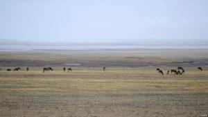 青海可可西里申遗成功 游牧藏民会被迁移吗?